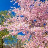 Frühling in Garmisch