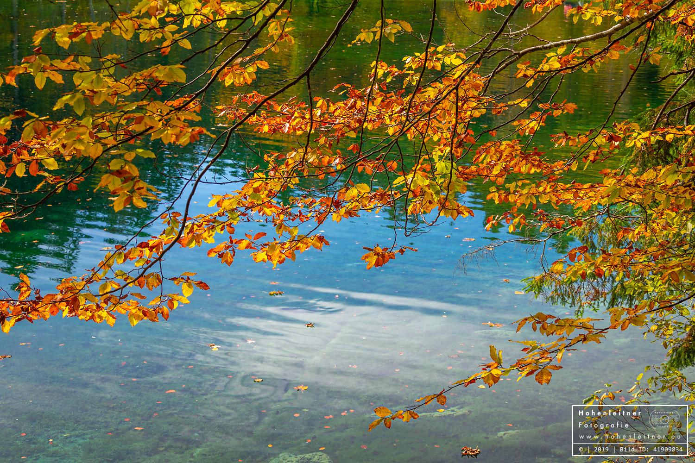 ID 41909834 - © Hohenleitner